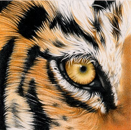 John McCain thinks he's Eye of the Tiger. Think again.